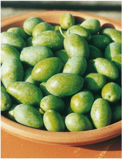 Bella di spagna iocoli vivai - Tipi di olive da tavola ...